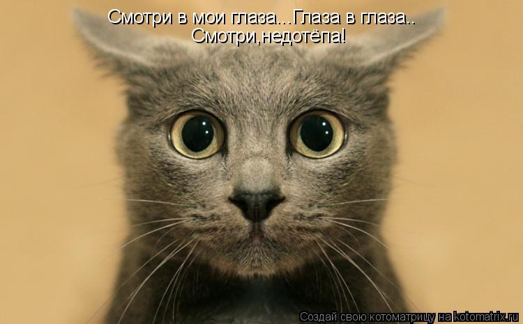 Котоматрица: Смотри в мои глаза...Глаза в глаза.. Смотри,недотёпа!