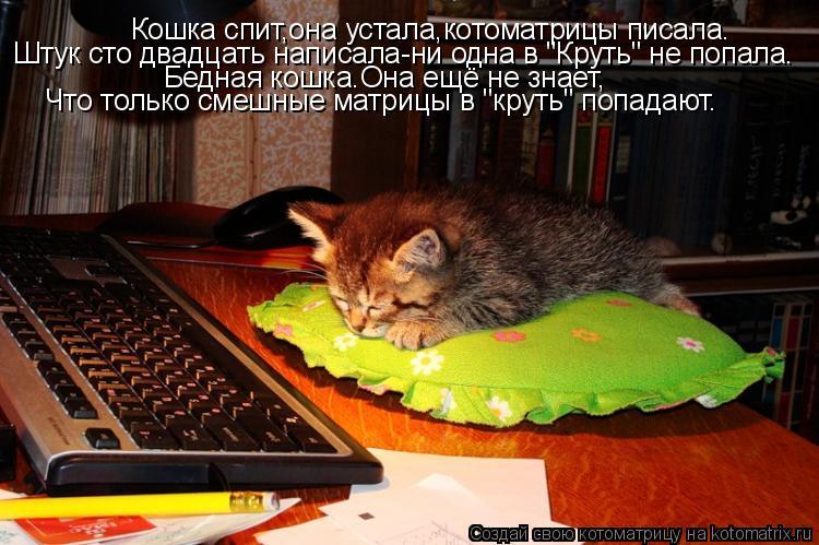 """Котоматрица: Кошка спит,она устала,котоматрицы писала. Штук сто двадцать написала-ни одна в """"Круть"""" не попала. Бедная кошка.Она ещё не знает, Что только см"""