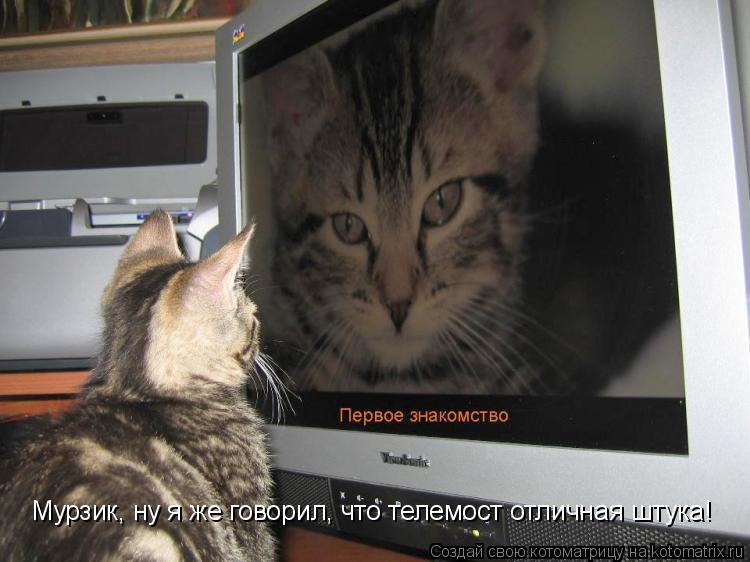 Котоматрица: Мурзик, ну я же говорил, что телемост отличная штука!