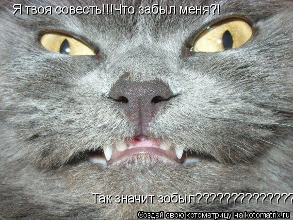 Котоматрица: Я твоя совесть!!!Что забыл меня?! Так значит зобыл???????????????