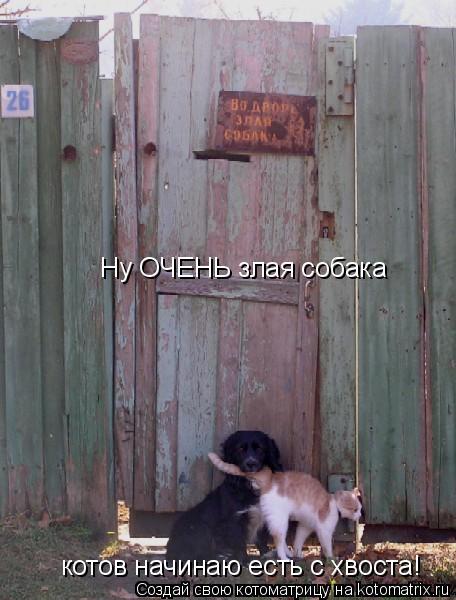 Котоматрица: Ну ОЧЕНЬ злая собака котов начинаю есть с хвоста!