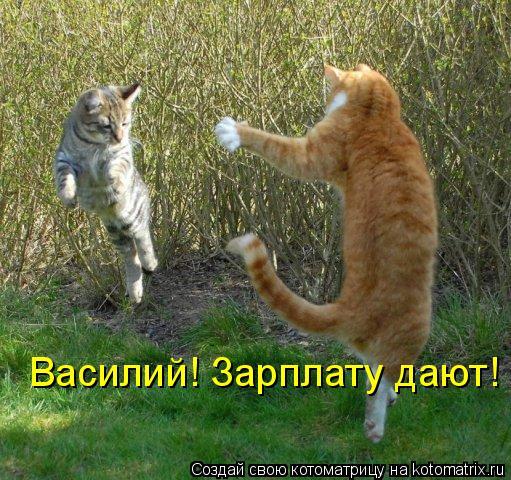 Котоматрица: Василий! Зарплату дают!