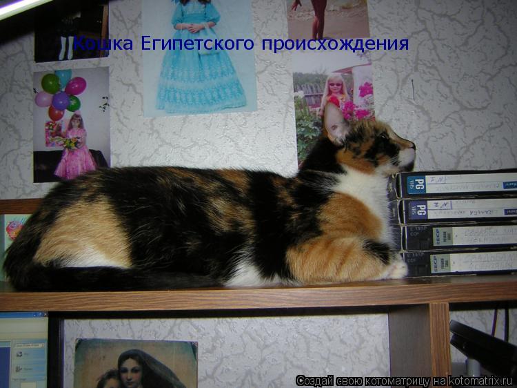 Котоматрица: Кошка Египетского происхождения