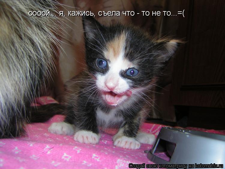 Котоматрица: оооой... я, кажись, съела что - то не то...=(