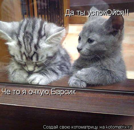 Котоматрица: Че то я очкую,Барсик Да ты успокОйся!!