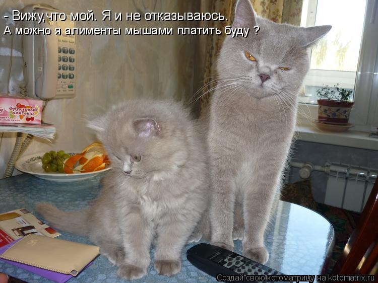 Котоматрица: - Вижу,что мой. Я и не отказываюсь. А можно я алименты мышами платить буду ?