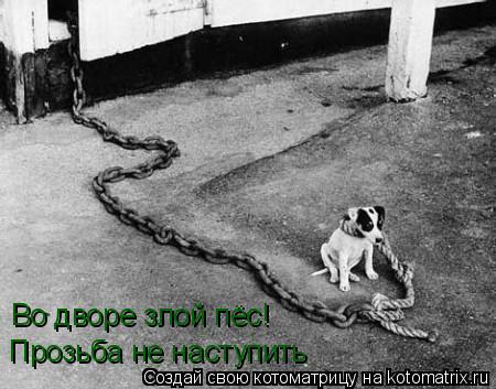 Котоматрица: Во дворе злой пёс! Прозьба не наступить