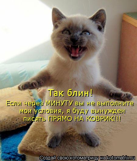 Котоматрица: Так блин! Если через МИНУТУ вы не выполните мои условия, я буду вынужден писять ПРЯМО НА КОВРИК!!!