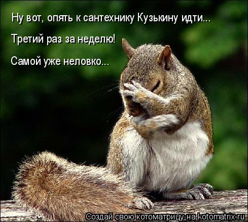 Котоматрица: Ну вот, опять к сантехнику Кузькину идти... Третий раз за неделю! Самой уже неловко...