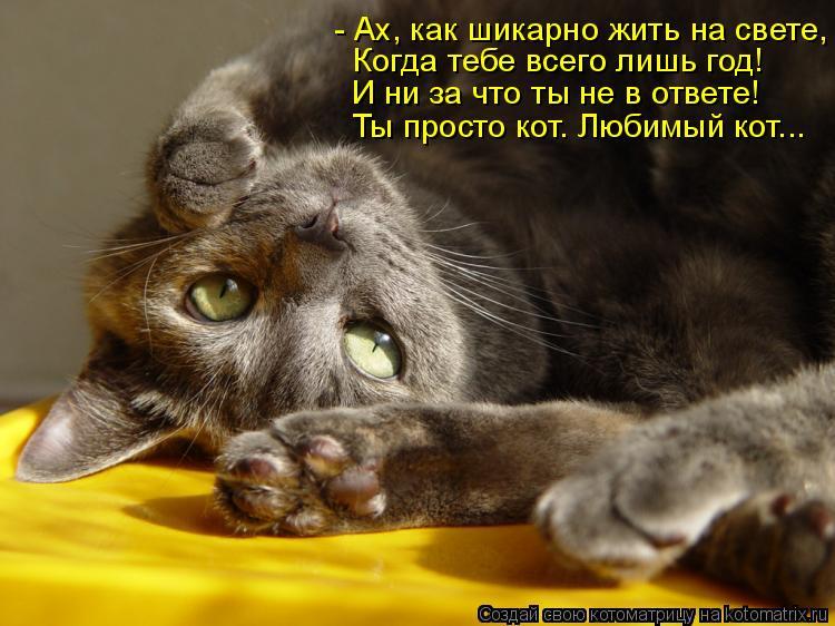 Котоматрица: - Ах, как шикарно жить на свете, Когда тебе всего лишь год! И ни за что ты не в ответе! Ты просто кот. Любимый кот...
