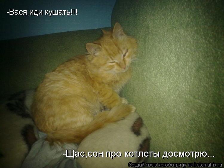 Котоматрица: -Вася,иди кушать!!! -Щас,сон про котлеты досмотрю...