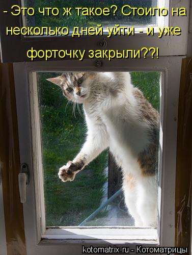 Котоматрица: - Это что ж такое? Стоило на несколько дней уйти - и уже форточку закрыли??!
