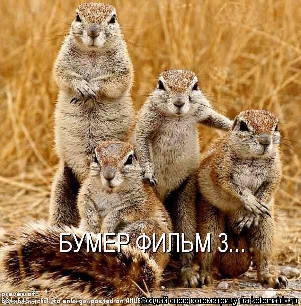 Котоматрица: БУМЕР ФИЛЬМ 3...