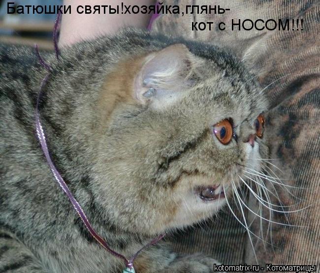 Батюшки святы!хозяйка,глянь- кот с НОСОМ!!!