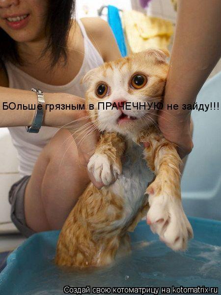 Котоматрица: БОльше грязным в ПРАЧЕЧНУЮ не зайду!!!!