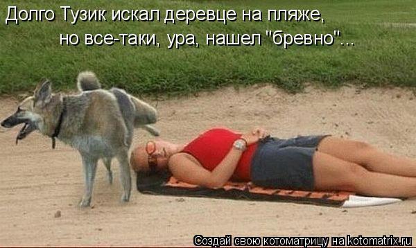 """Котоматрица: Долго Тузик искал деревце на пляже, но все-таки, ура, нашел """"бревно""""..."""
