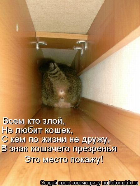 Котоматрица: Всем кто злой, Не любит кошек, С кем по жизни не дружу, В знак кошачего презренья Это место покажу!