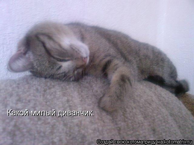 Котоматрица: Какой милый диванчик.