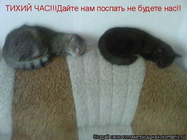Котоматрица: ТИХИЙ ЧАС!!!Дайте нам поспать не будете нас!!