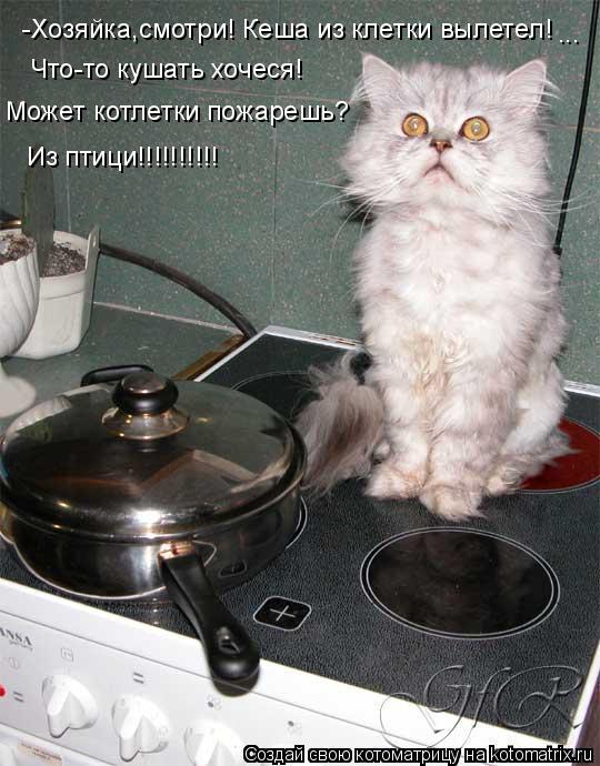 Котоматрица: -Хозяйка,смотри! Кеша из клетки вылетел! Что-то кушать хочеся! Может котлетки пожарешь? Из птици!!!!!!!!!! ...