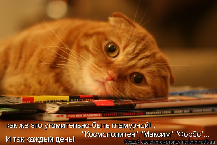 """Котоматрица: как же это утомительно-быть гламурной!.. """"Космополитен"""",""""Максим"""",""""Форбс""""... И так каждый день!"""