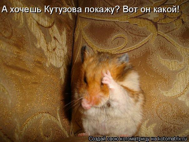 Котоматрица: А хочешь Кутузова покажу? Вот он какой!