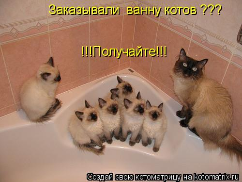 Котоматрица: Заказывали  ванну котов ??? !!!Получайте!!!