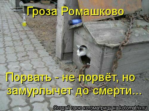 Котоматрица: Гроза Ромашково Порвать - не порвёт, но замурлычет до смерти...