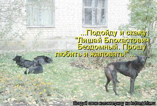 """Котоматрица: ...Подойду и скажу: """"Лишай Блохастович Бездомный. Прошу  любить и жаловать!""""..."""