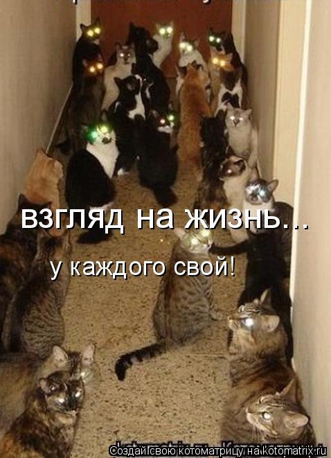 Котоматрица: взгляд на жизнь... у каждого свой!