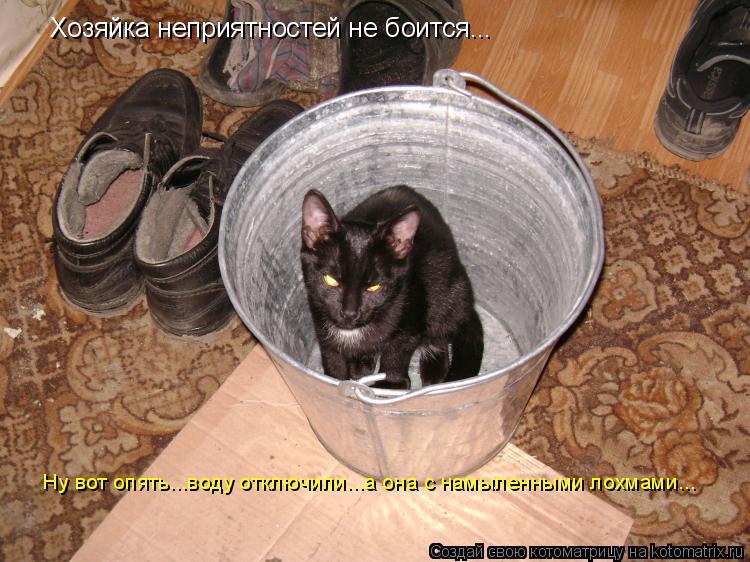 Котоматрица: Хозяйка неприятностей не боится... Ну вот опять...воду отключили...а она с намыленными лохмами...