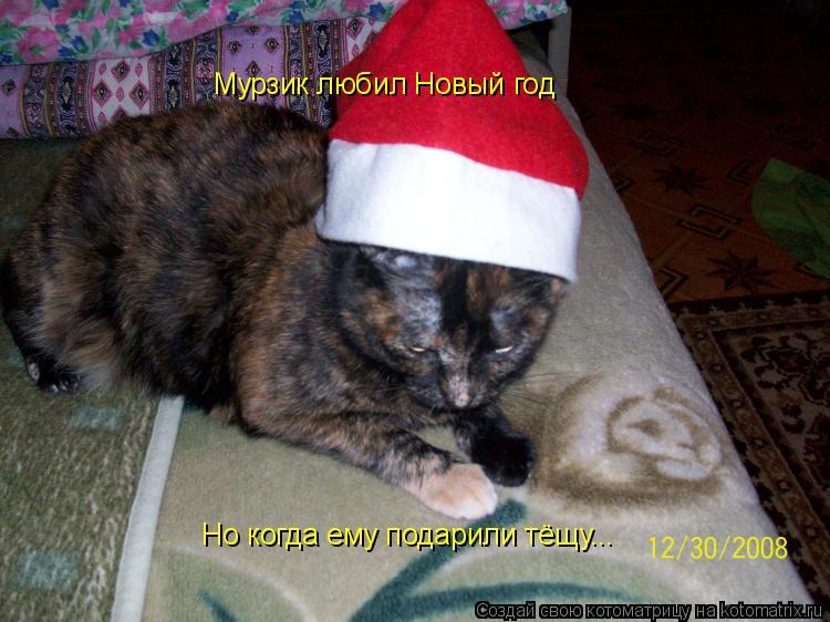 Котоматрица: Мурзик любил Новый год Но когда ему подарили тёщу...