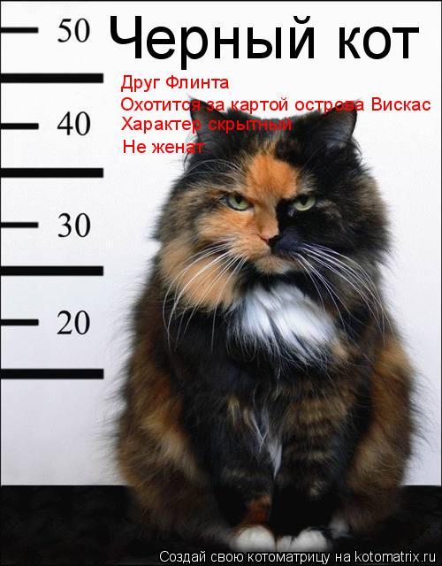 Котоматрица: Черный кот Друг Флинта Охотится за картой острова Вискас Характер скрытный Не женат