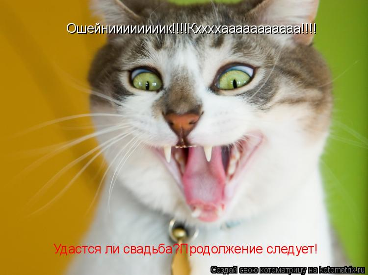 Котоматрица: Ошейниииииииик!!!!Кххххааааааааааа!!!! Удастся ли свадьба?Продолжение следует!