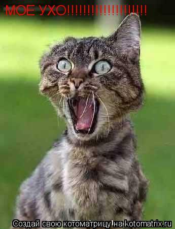 Котоматрица: МОЕ УХО!!!!!!!!!!!!!!!!!!!!