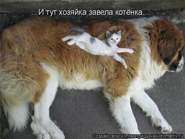 Котоматрица: ...И тут хозяйка завела котёнка...