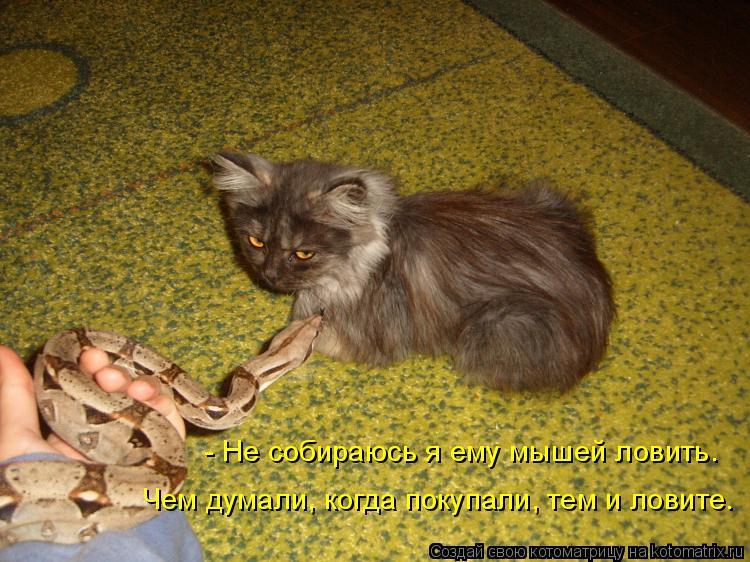 Котоматрица: - Не собираюсь я ему мышей ловить. Чем думали, когда покупали, тем и ловите.