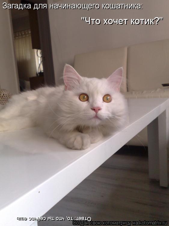 """Котоматрица: Загадка для начинающего кошатника: """"Что хочет котик?"""" Ответ: то, что ты сейчас ешь"""