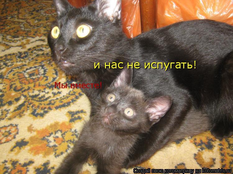 Котоматрица: Мы вместе! и нас не испугать!