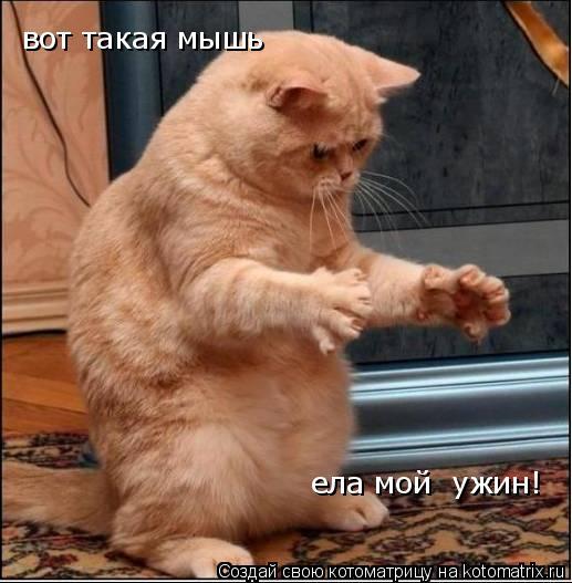 Котоматрица: вот такая мышь ела мой  ужин!