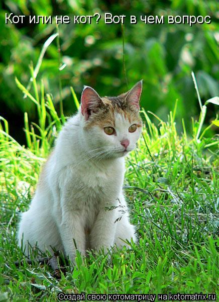 Котоматрица: Кот или не кот? Вот в чем вопрос