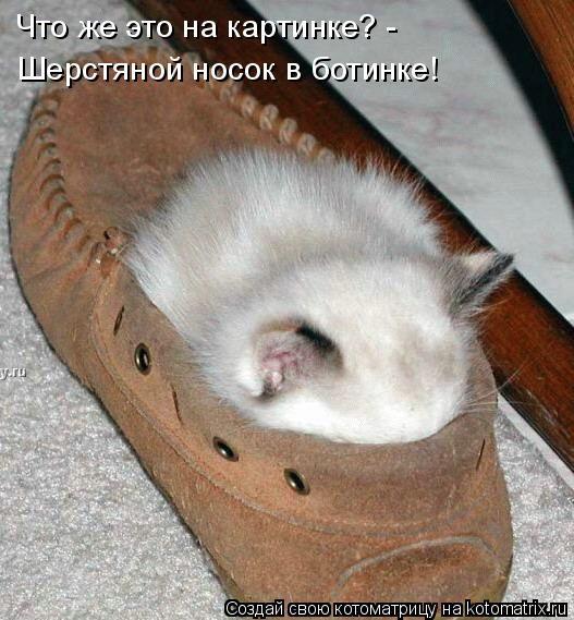 Котоматрица: Что же это на картинке? - Шерстяной носок в ботинке!