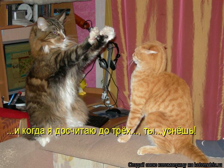 Котоматрица: ...и когда я досчитаю до трёх..., ты...уснёшь!