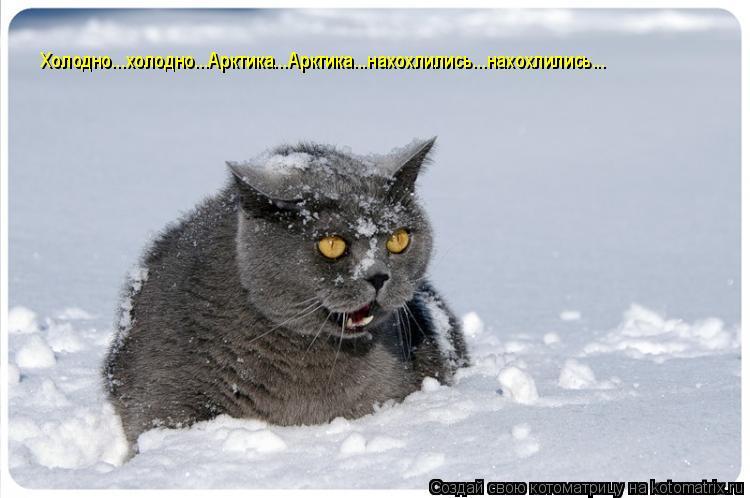 Котоматрица: Холодно...холодно...Арктика...Арктика...нахохлились...нахохлились...