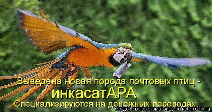 Котоматрица: Выведена новая порода почтовых птиц -  инкасатАРА Специализируются на денежных переводах.