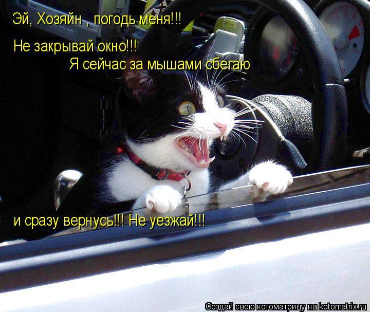 Котоматрица: Эй, Хозяйн , погодь меня!!! Не закрывай окно!!! Я сейчас за мышами сбегаю и сразу вернусь!!! Не уезжай!!!