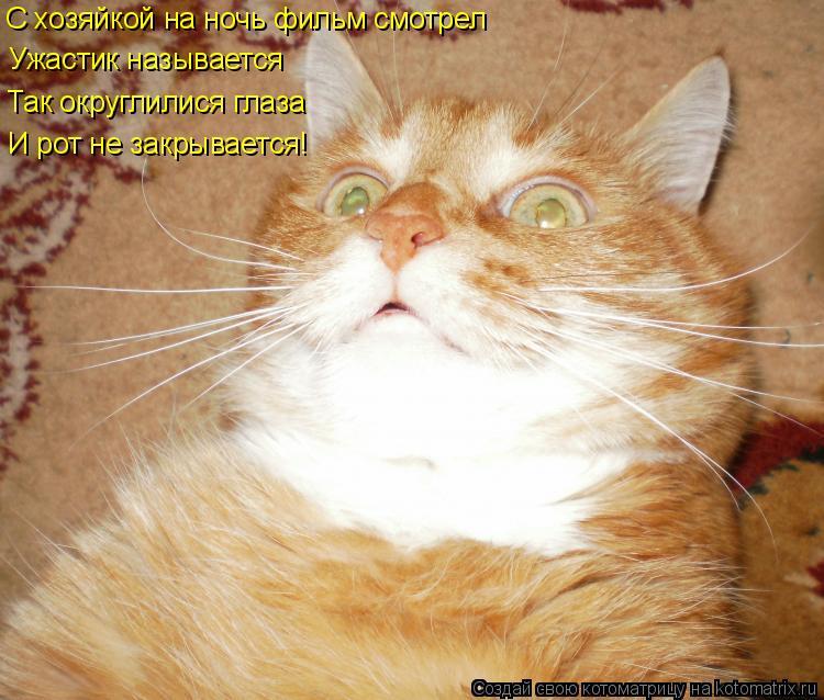 Котоматрица: Ужастик называется С хозяйкой на ночь фильм смотрел Так округлилися глаза И рот не закрывается! И рот не закрывается!