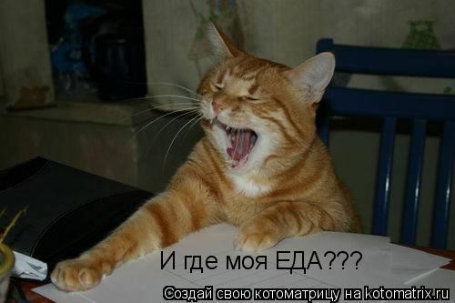Котоматрица: И где моя ЕДА???
