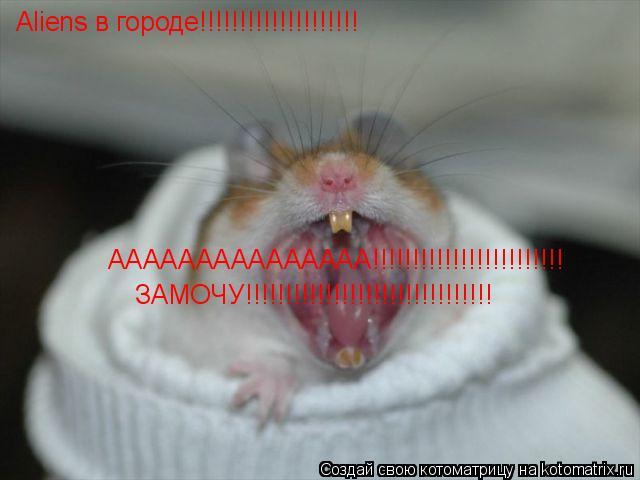 Котоматрица: Aliens в городе!!!!!!!!!!!!!!!!!!!! ААААААААААААААА!!!!!!!!!!!!!!!!!!!!!!!! ЗАМОЧУ!!!!!!!!!!!!!!!!!!!!!!!!!!!!!!!