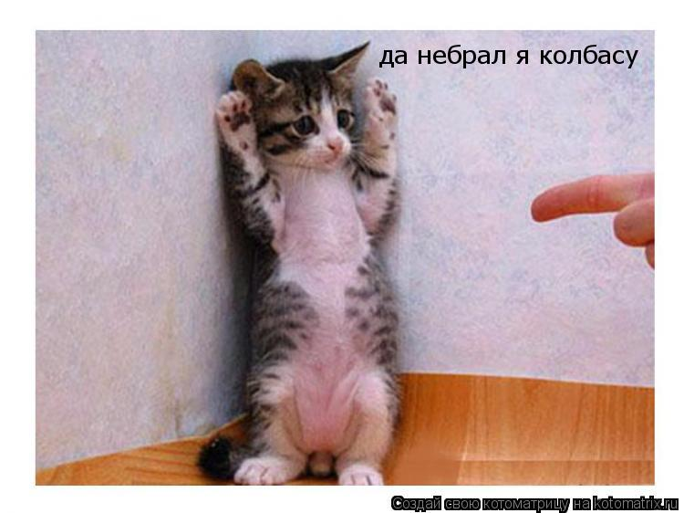 Котоматрица: да небрал я колбасу